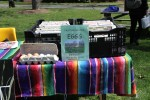 Pasture-raised eggs for sale at the Students for Sustainable Agriculture table. Photo by Gabriela Jeronimo.