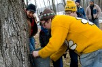 Luciano Lemos (left) looks over his son Lucas Lemos (second from left) as he and Seamus Schwartz (yellow hat) watch intently while Creek Iverson sets the tap and the bucket to catch the sap from the maple tree. Photo by Dawna M. Cservak.