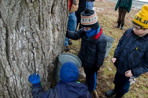 Three young volunteers: Ben Gilman (bottom), Seamus Schwartz (right) and Lucas Lemos (top left) wait patiently for the fruits of their labor as they stand over the first bucket tapped for the day. They wait for the first signs of sap to drip from the sugar maple tree at the Maple Sugaring Prep Work Party and Potluck taking place at the Brook Farm Project in New Paltz, NY. Photo by Dawna M. Cservak.