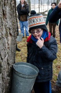 The first to be daring, volunteer Lucas Lemos dips his finger into the sap so that he may get his first taste of sap directly from a sugar maple tree at the Maple Sugaring Prep Work Party and Potluck taking place at the Brook Farm Project in New Paltz, NY. Photo by Dawna M. Cservak.