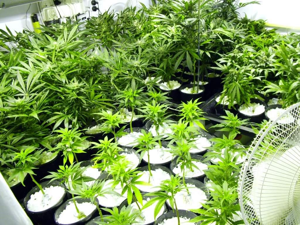 Marijuana: New York's Rx for Health?