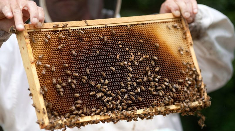 The Buzz Across America: Backyard Efforts To Save Our Honeybees