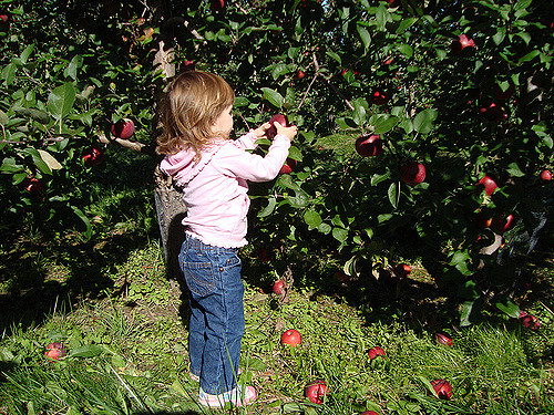 Ripe for Picking: Family Owned Farms and Orchards in Dutchess
