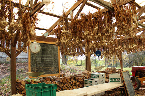 The remainder of the season's garlic crop, hanging above a board listing members' crop shares for the week. Photo by K.Kuprian