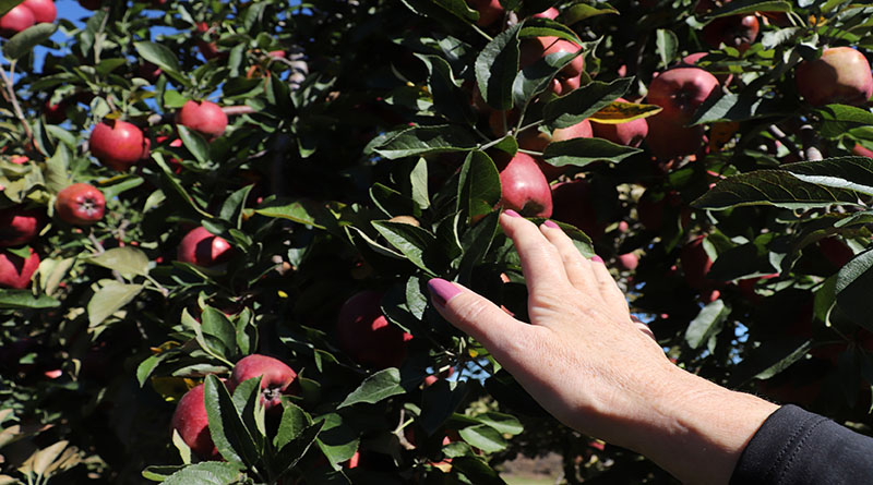 Fall Festivities with Friends and Family: Apple Picking at Apple Hill Farm