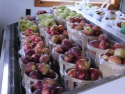 A display in the Dressel store of the variety of apples being sold. Photo by Kelsey Damrad.
