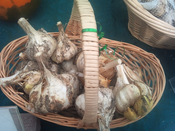 Elephant Garlic for sale at Summit Naturals booth. Elephant garlic is actually a member of the leek family.