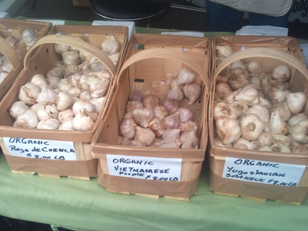 Piedmonte Garlic Farm, Albion N.Y., had certified organic Vietnamese Purple, Yugoslavian Softneck and Rojo de Cuenca varities of garlic. Photo by Faith Gimzek.