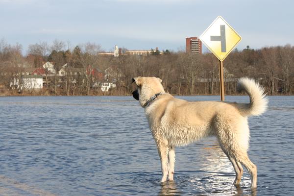 Flood Rains Havoc on New Paltz