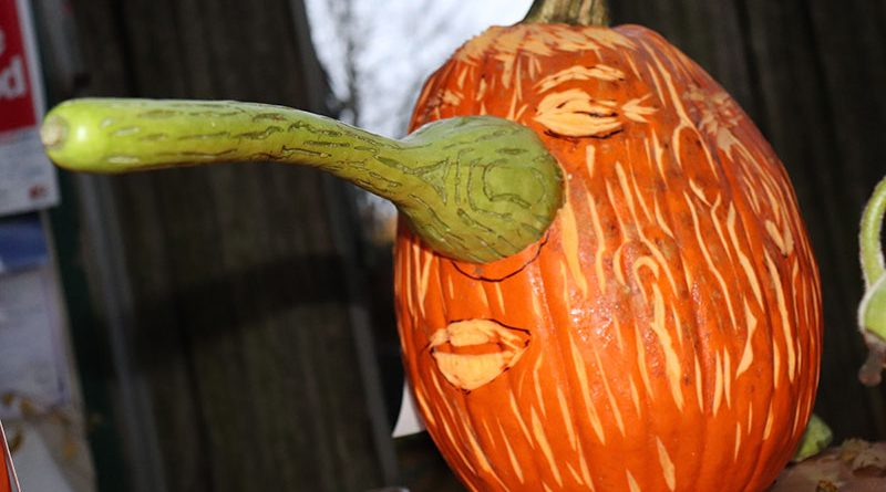 A pumpkin carved with a Pinocchio-like nose.