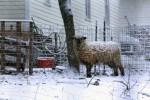 Farm in Millbrook, NY. Photo by Hopeton Harrell