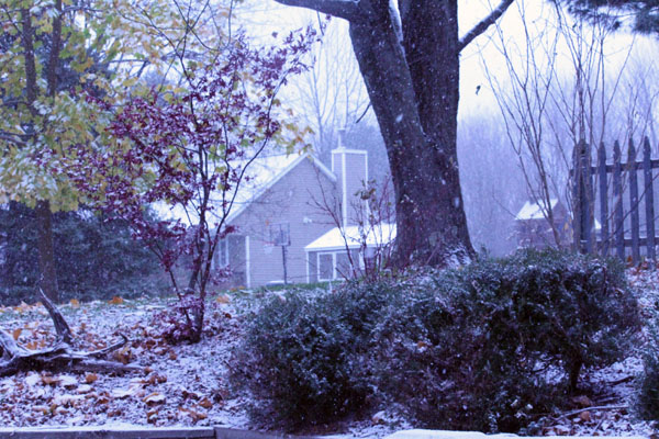 Scene from first snow. Backyard of house in Millbrook, N.Y. Photo by Hopeton Harrell